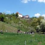 Von Unterjesingen zum Schloss Roseck