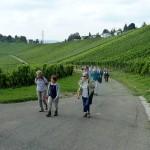 Die Wanderung geht durch die Weinberge