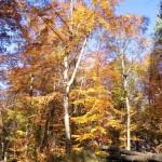 Baumfärbung im Wald