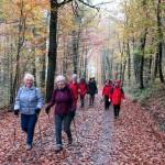 Wanderung im schönen Herbstwald [Foto: W. Speiser]