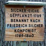 Die über 200 Jahre alte Silcher Eiche