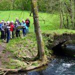 Im Buchenbachtal an einer alten steinernen Brücke [Foto: Bader]